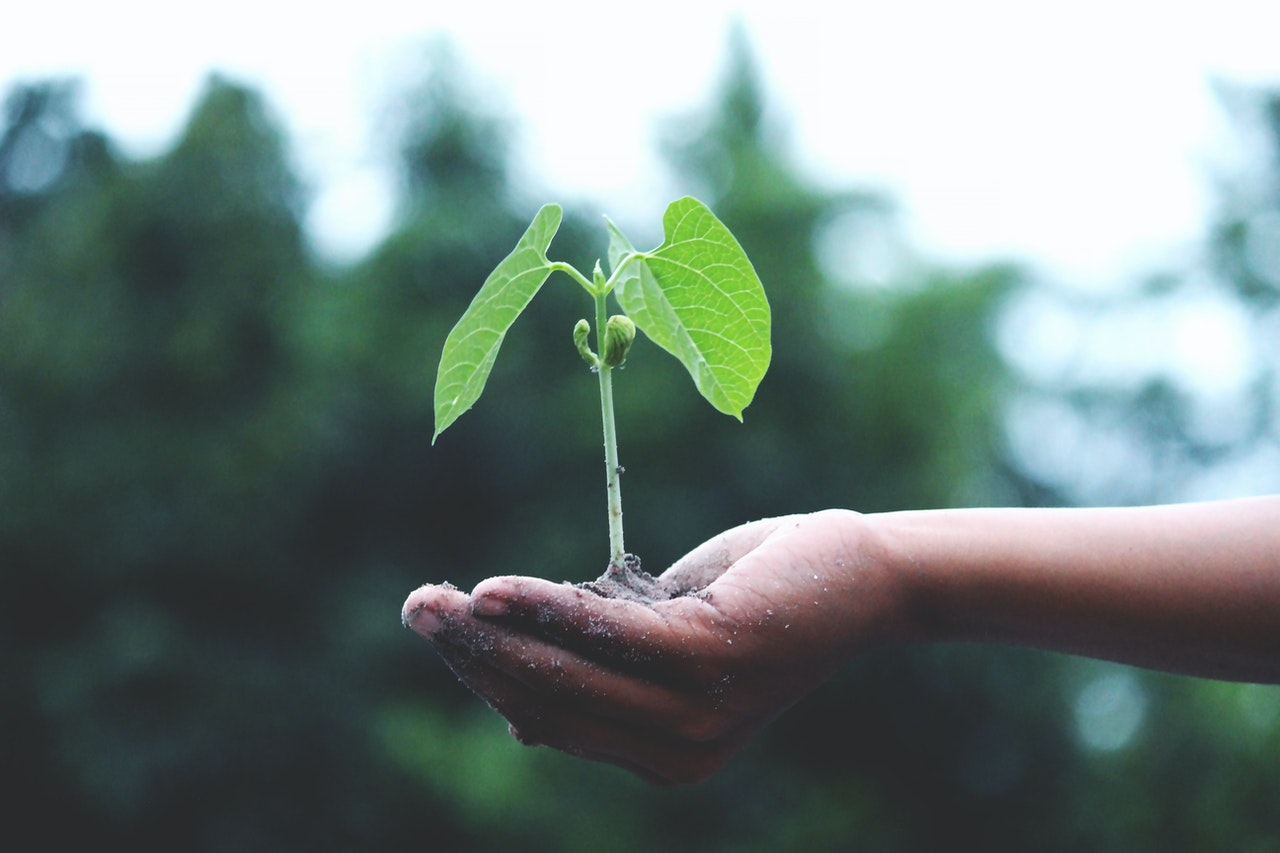 hand holding sprouting plant - acupuncture regrowth